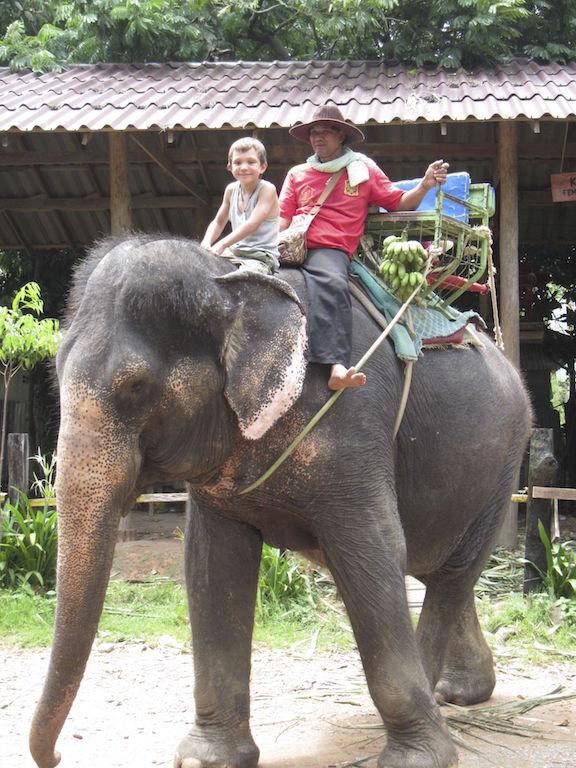 J Elephant 2013 copy